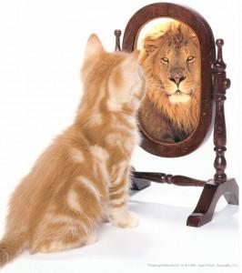 chat-devant-un-miroir