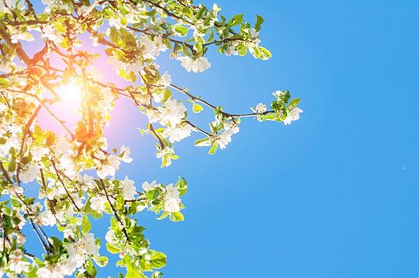 Arbre au printemps sous le soleil représentant les besoins primaires